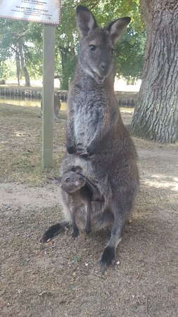 La Possonniere, Prancis: Kangourous