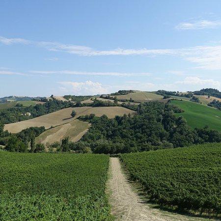 Monteciccardo, Italia: photo0.jpg