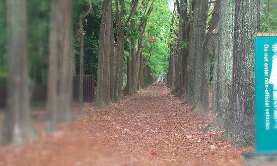 Sinwei Forest Park
