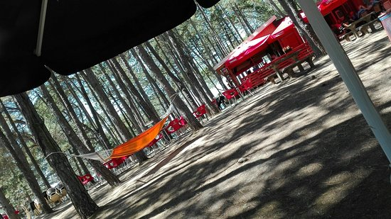 Castel Rigone, Italy: . . . tra gli alberi . . . Herman . . .