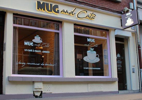 Mug and Cats