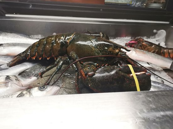 Lido Aurora: This may have been the biggest lobster I've ever seen