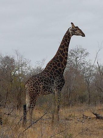 Umkumbe Safari Lodge - Guesthouse Reviews & Price Comparison (Sabi
