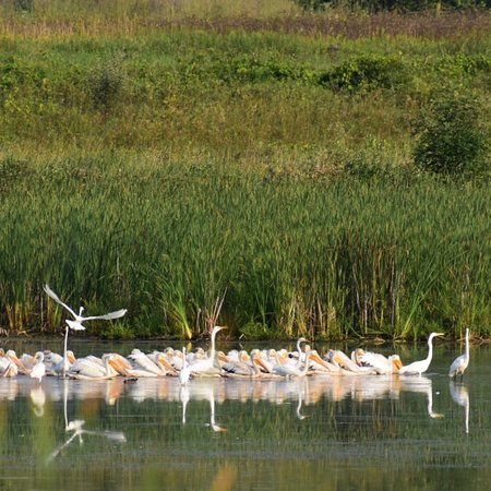 Horicon National Wildlife Refuge: photo0.jpg