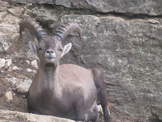Parc zoologique Bienne