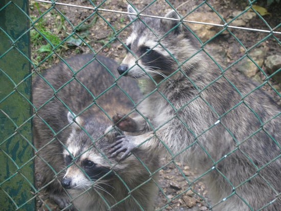 Zoo Biel