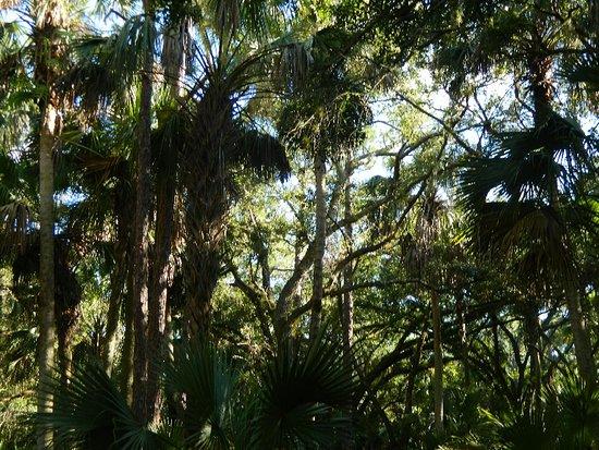 Bluefield Ranch Preserve