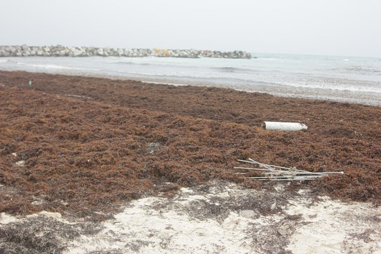 Seaweed piled up on the east facing beach, so disappointing