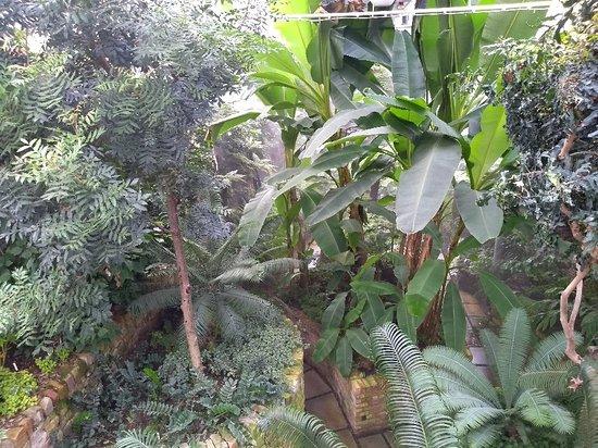 Botanic Gardens: IMG_20180809_142112801_large.jpg