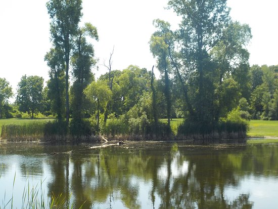 Gasport, NY: Pond and Trees at the Royalton Ravine