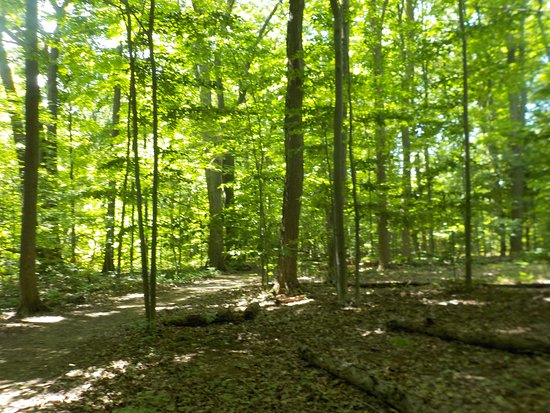 Gasport, NY: View of the trail