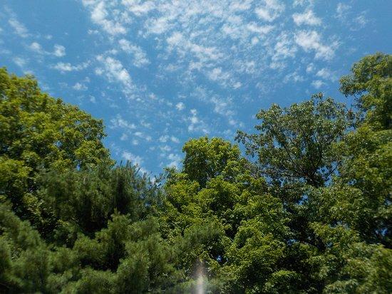 Gasport, NY: Look at that sky!!!!