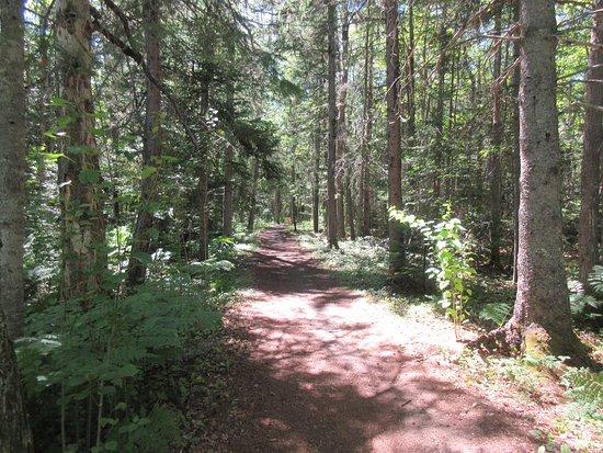 Bouctouche, Canada: Sentier dans la foêt