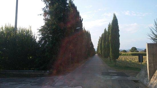 San Vito di Altivole, Italia: Viale d'accesso al cimitero