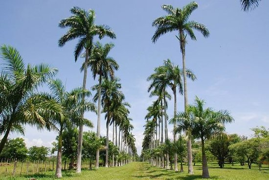 Botanical Garden of Cienfuegos