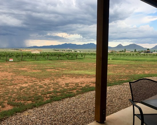 Elgin, AZ: Vineyard views from the porch outside.
