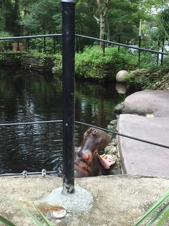 Homosassa Springs, FL: Lu asking for some melon!