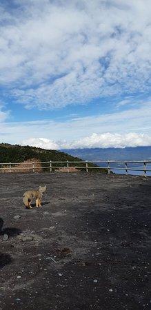 Volcan Osorno: Zorro Gaton.