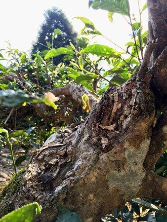 Yen Bai, Βιετνάμ: vietmountaintravel.com.vn