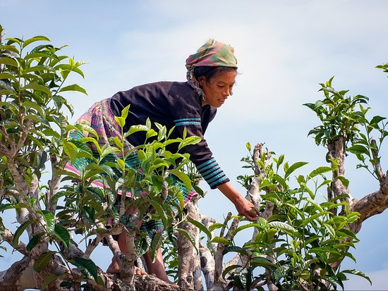 Yen Bai, Вьетнам: vietmountaintravel.com.vn
