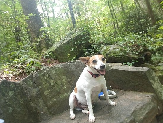 Anna Ruby Falls: Sushi on the stone couch!