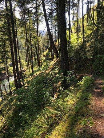 Umpqua, Орегон: Panther segment I think