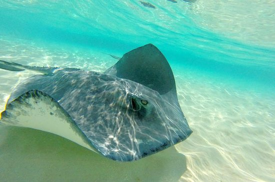 Grand Cayman Stingray City, Coral...