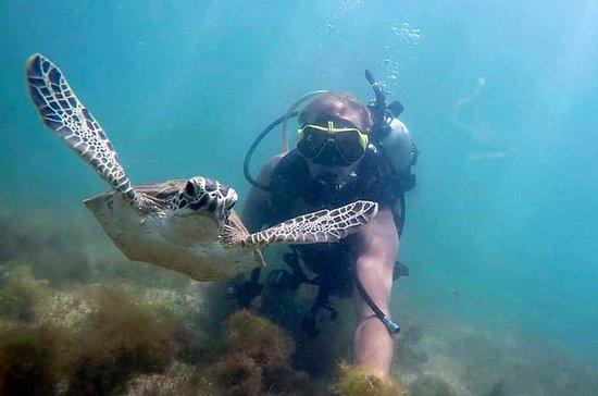 Visite guidée en plongée sous-marine...