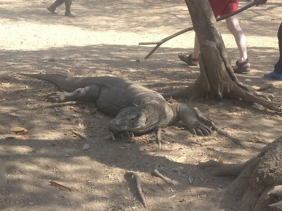 See Komodo Tour (Labuan Bajo) - 2019 All You Need to Know