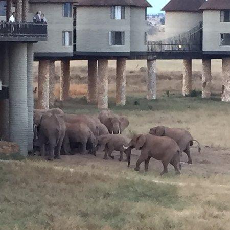 Tsavo, Kenya: photo1.jpg