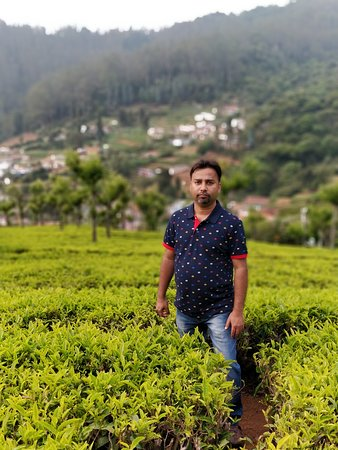 Portrait - Tea Garden