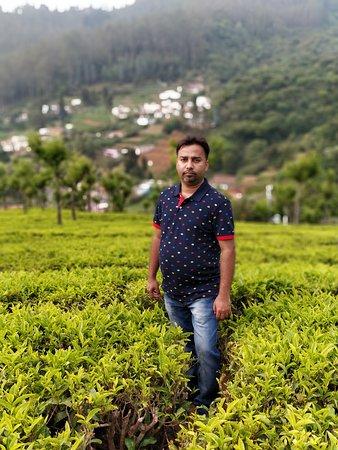 Another angle- Tea Garden