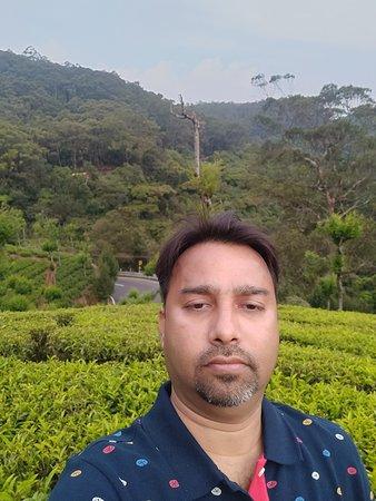 Tea Garden - View