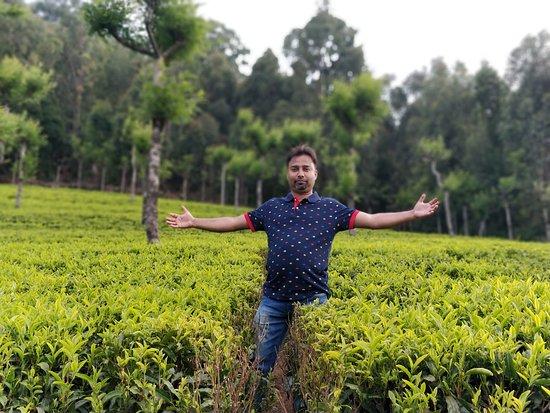 SRK Style - Tea Garden