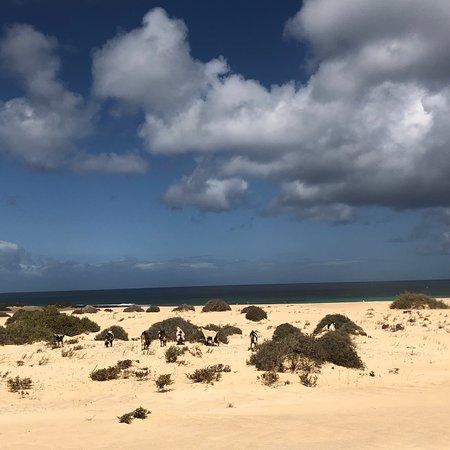 Parque Natural de Corralejo: photo2.jpg