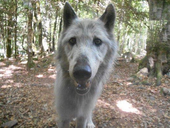 La Maison Des Loups Orlu 2021 All You Need To Know Before You Go With Photos Tripadvisor