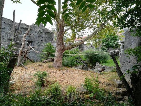 garten frankfurt, img_20180813_123559_large - picture of frankfurt zoo, Design ideen