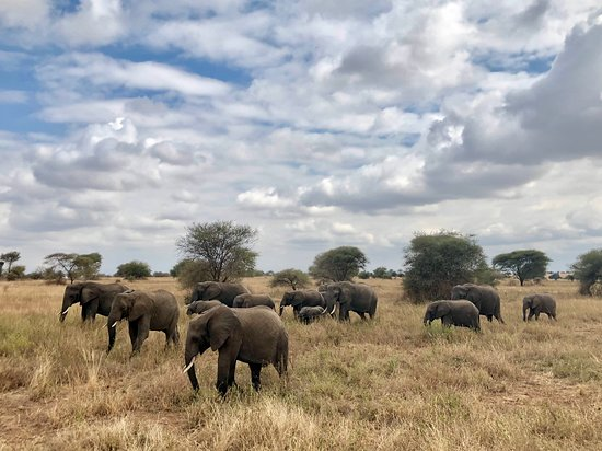 Capture Africa Tours (Nairobi) - 2019 All You Need to Know