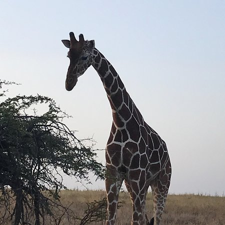 Laikipia County, Kenya: photo0.jpg