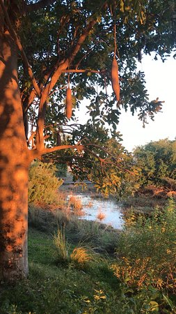 Caprivi Region, Namibia: sunrise from our suite