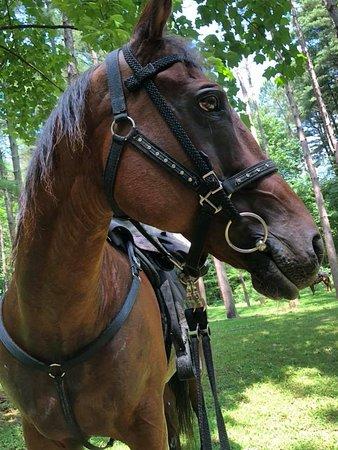 East Liverpool, OH: my horse Mac!