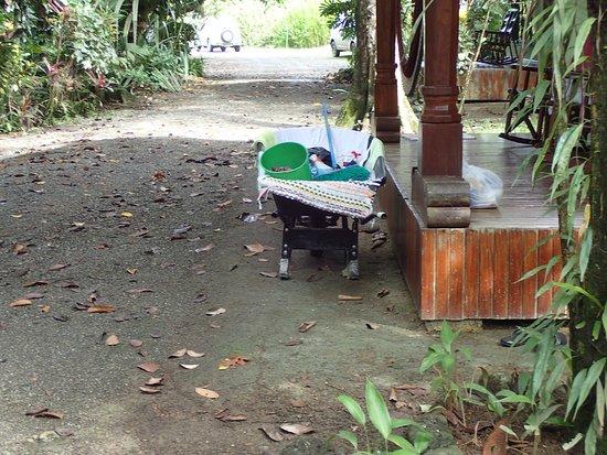 Las Islas Lodge: Het poetskarretje