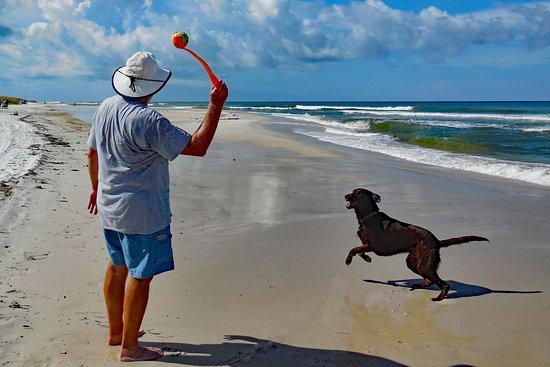 Cape San Blas: dog paradise