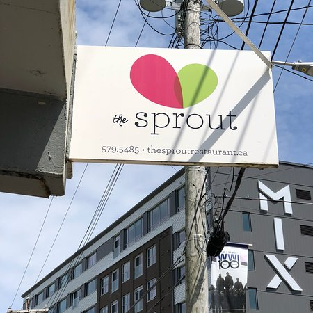 The Sprout: photo8.jpg