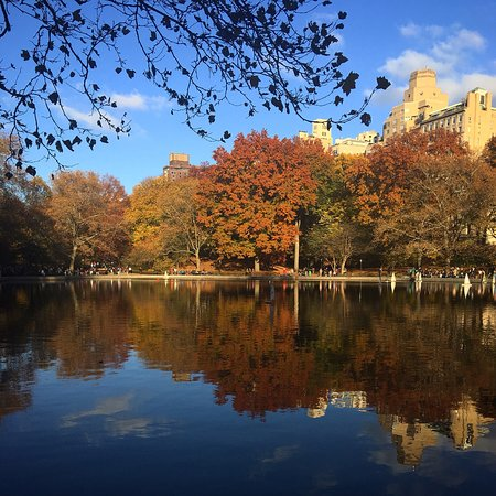 Fall in Central Park