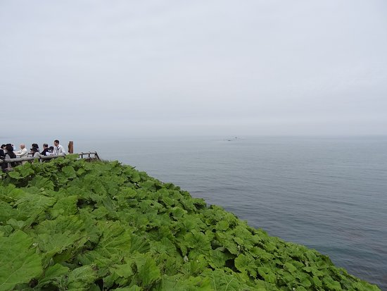 Foto Tanjung Kiritappu  (Tanjung Toufutsu )