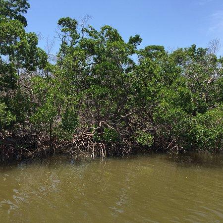 Everglades National Park Boat Tours: photo0.jpg