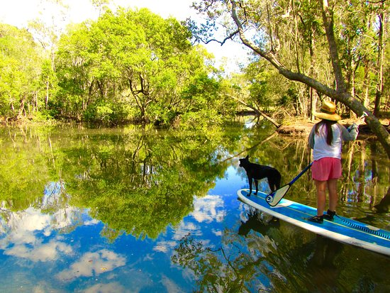 Byron Stand Up Paddle: Stunning reflections down the tunnel of trees