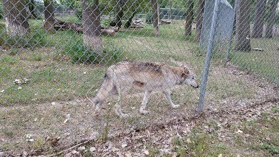 The Dakota Zoo Foto