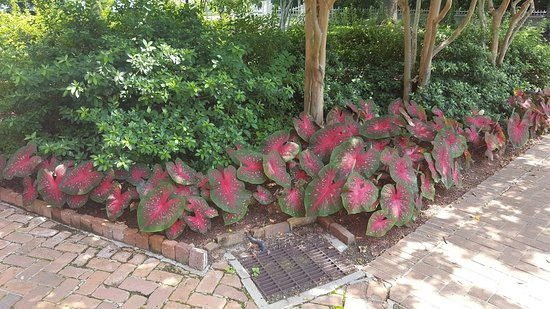 Rosalie Mansion: Beautiful Plants On The Grounds